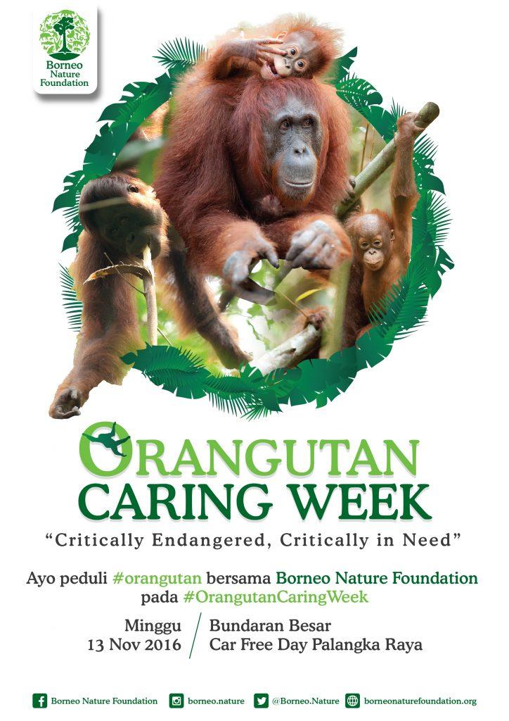 orangutan-caring-week-01-01-01