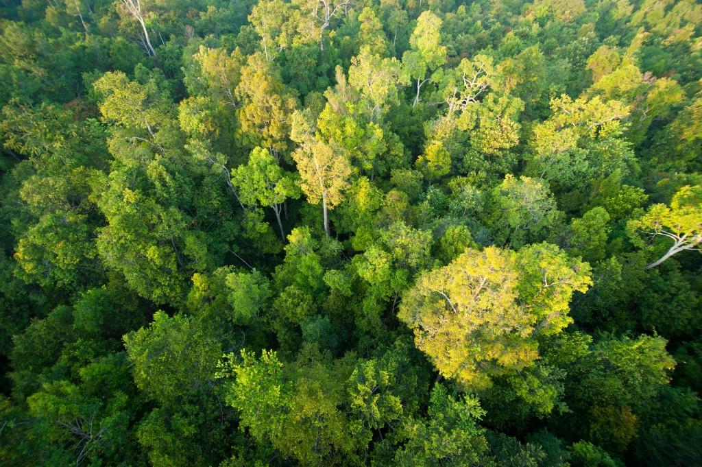 Hutan Hujan Kalimantan Terbakar, Lengkapi Kecemasan Setelah Amazon #beritahariini