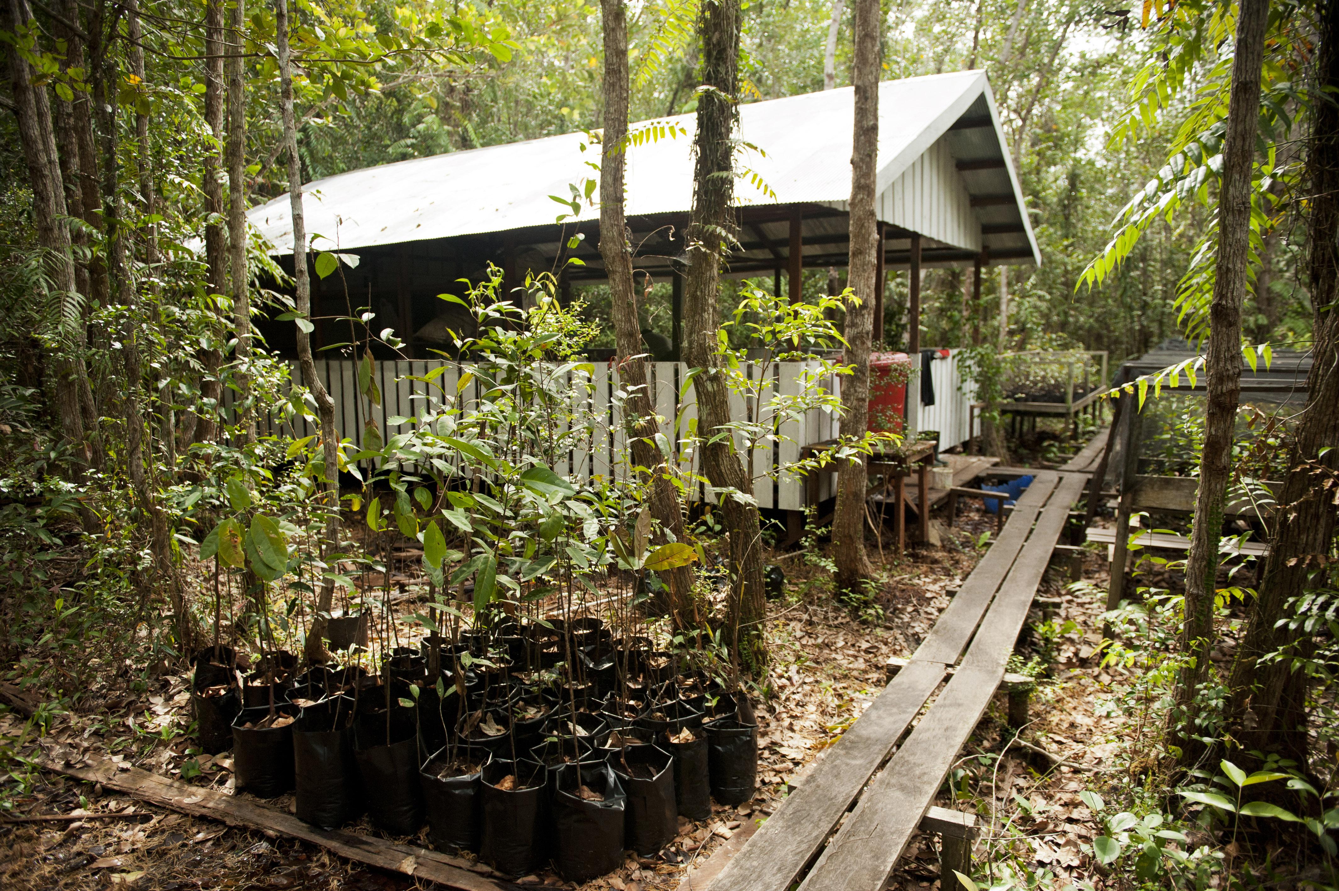 Sabangau's seedling nursery