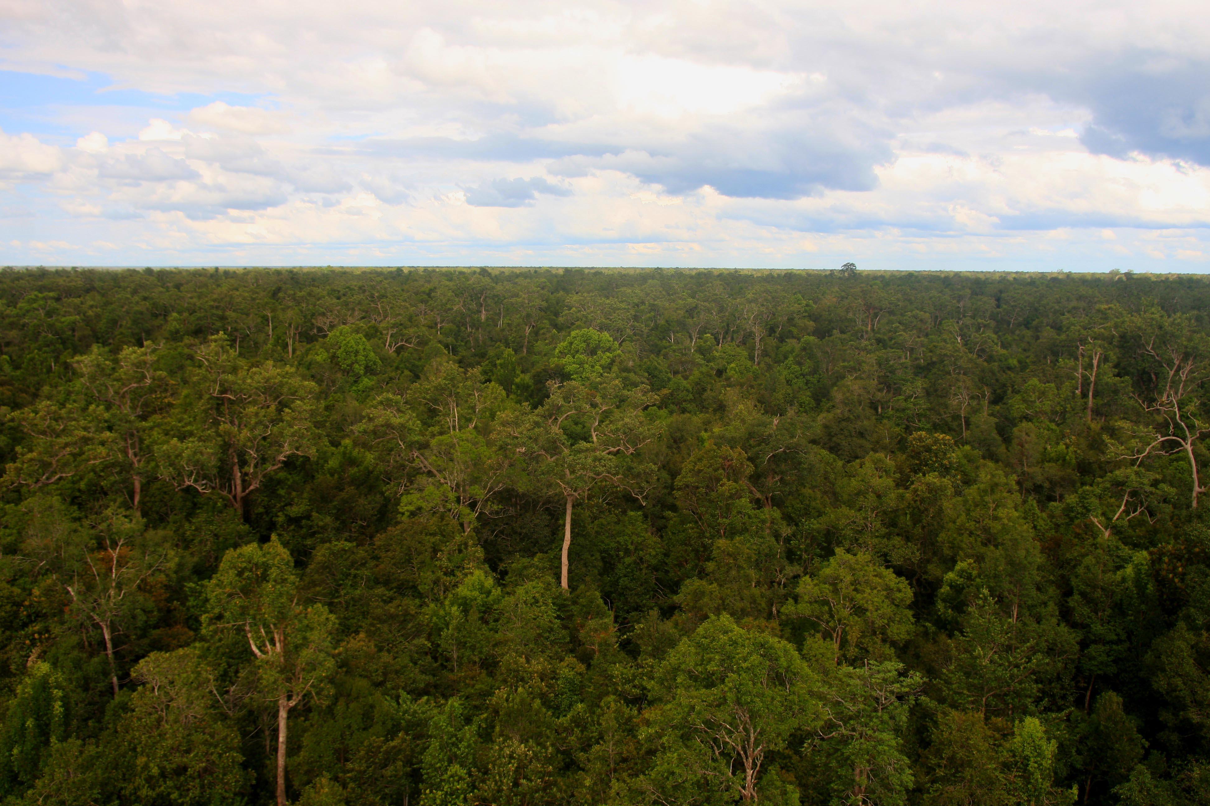 Sabangau Forest