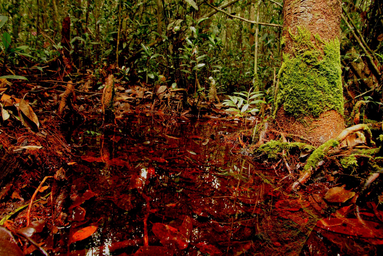 Sabangau peat-swamp