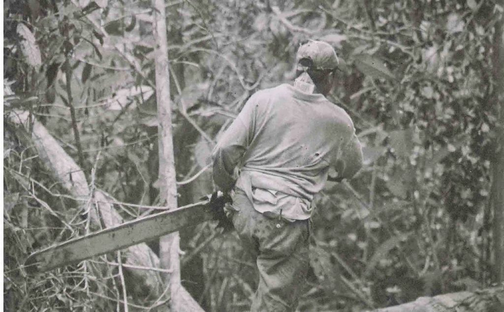 Pic 8. Logger in Sabangau. Photo by Helen Morrogh-Bernard