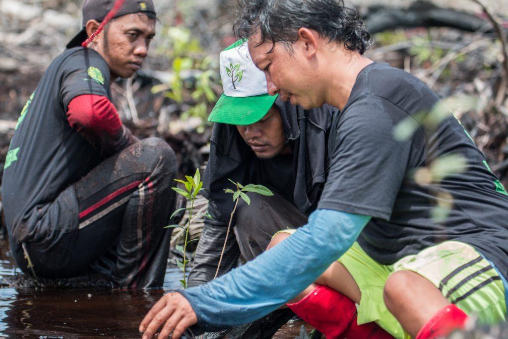 planting-october-2016-5-sabangau-pau-brugues-sintes