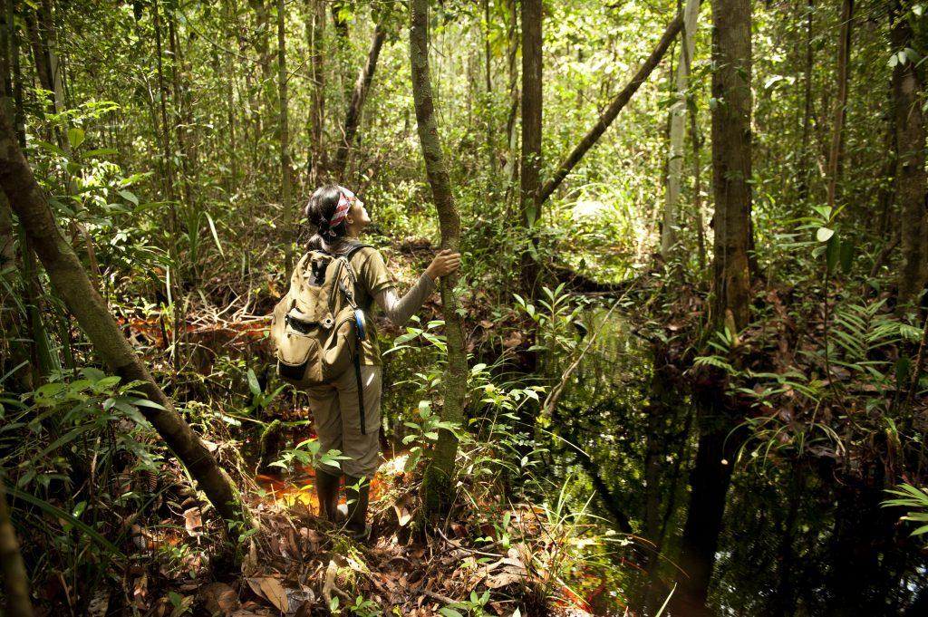 BNF's volunteer trying to find orangutan in the wild