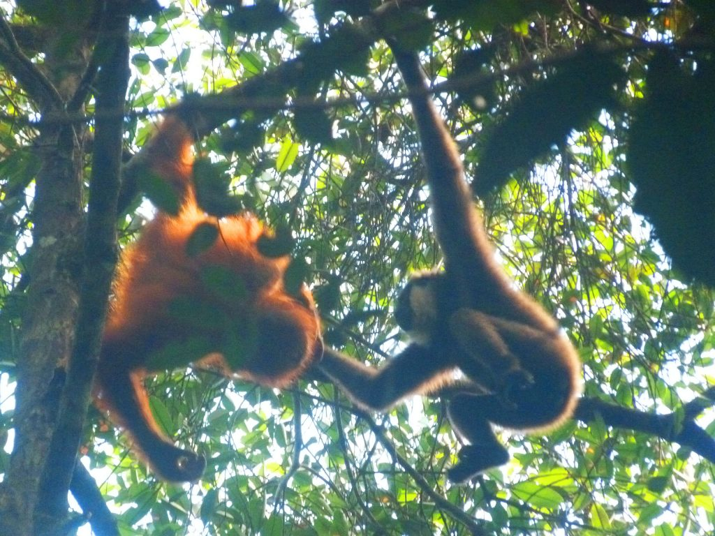 Chilli and orangutan (1)