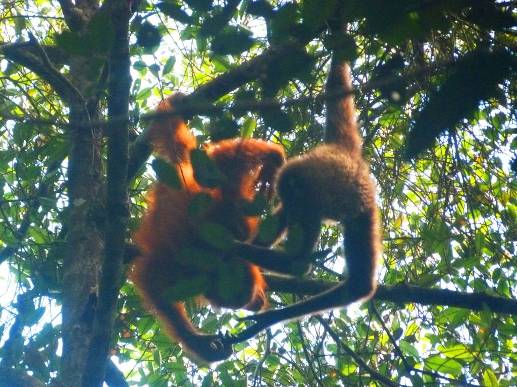 Chilli and orangutan (2)