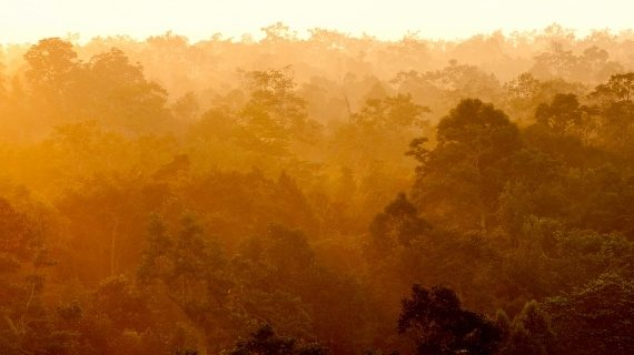 Forest landscape. Photo by Andrew Walmsey & Borneo Nature Foundation (1280x320)