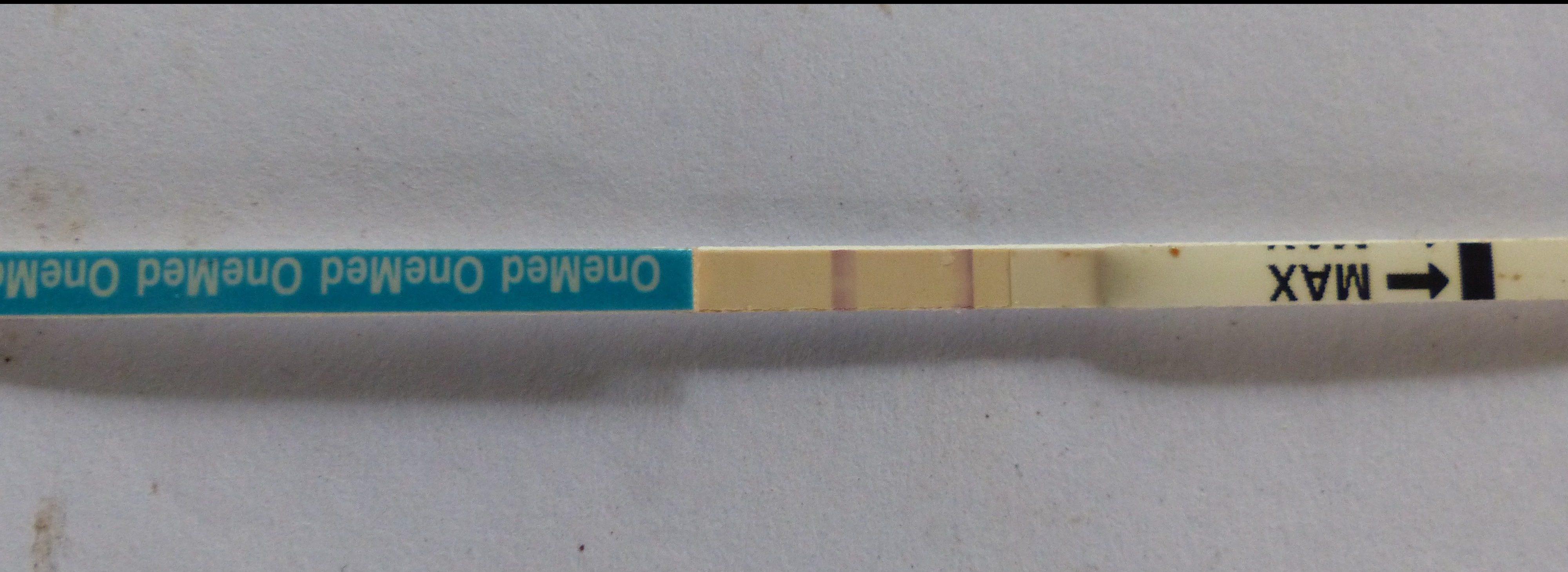Positive Pregnancy Test Borneo Nature Foundation