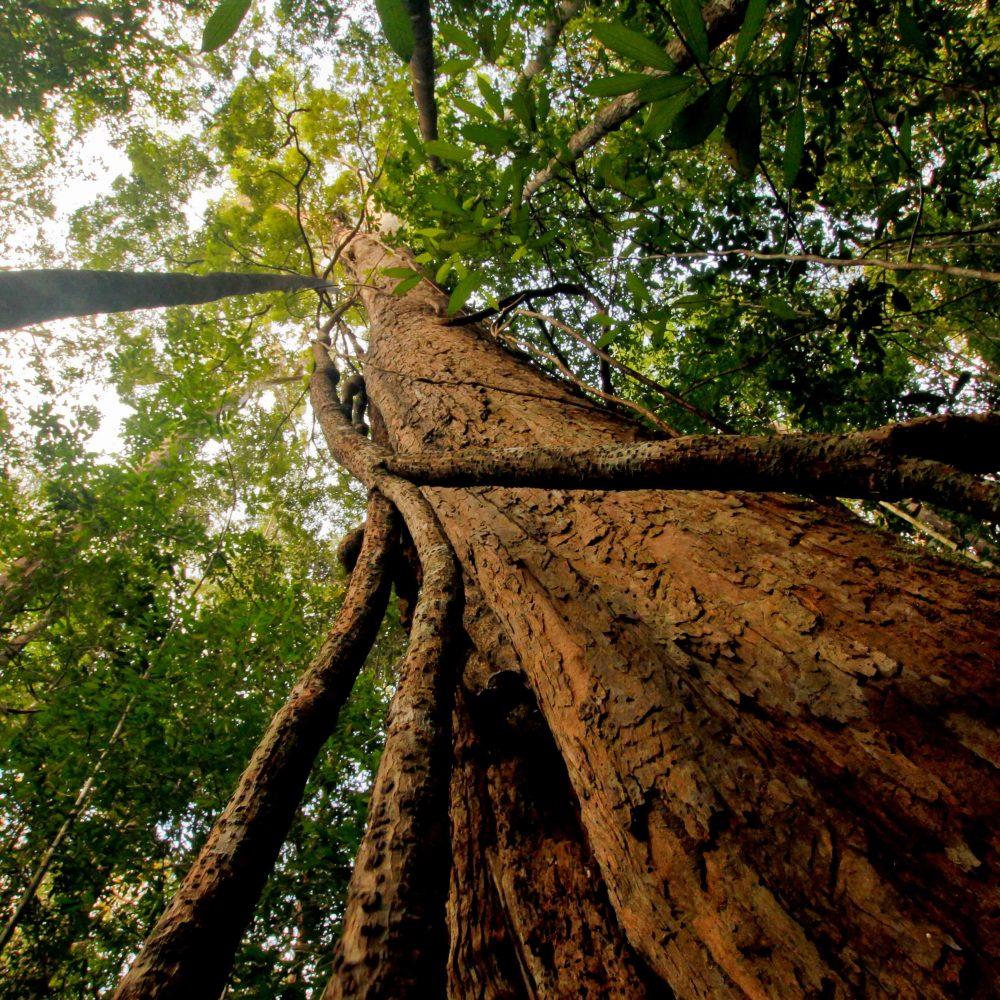 rainforest borneo_Bernat Ripoll_BNF 2017