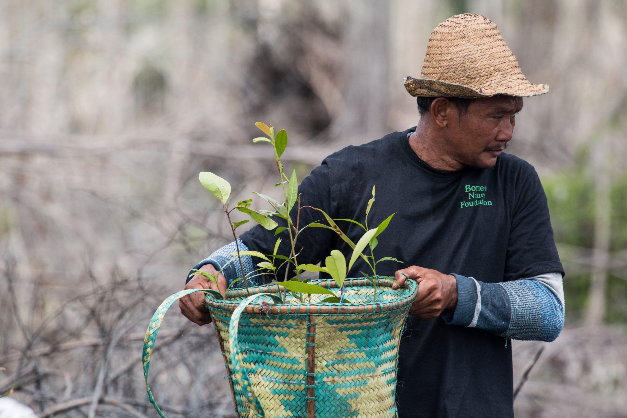 Planting October 2016-1-Sabangau-Pau Brugues Sintes lowress