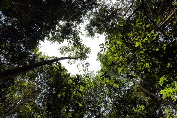 180808_Forest canopy_KHDTK Mungku Baru_Alex Lines_104958