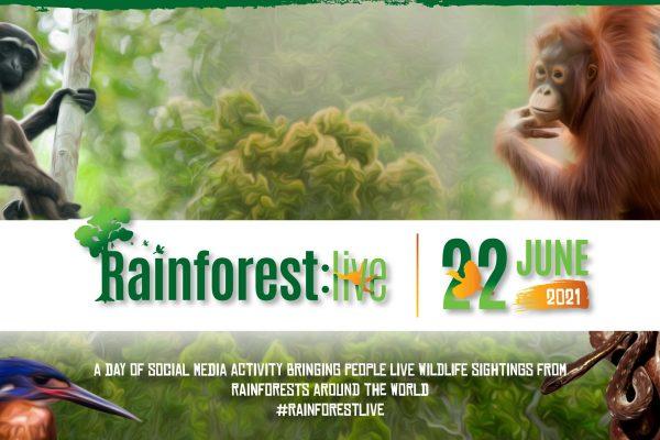 210604 - Rainforest live - web-crop