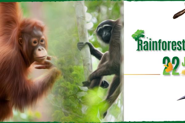 210604 - Rainforest live - web