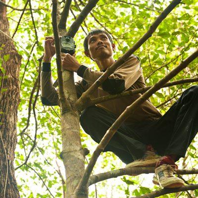 Adul-Fixing-Tree-Trap-3