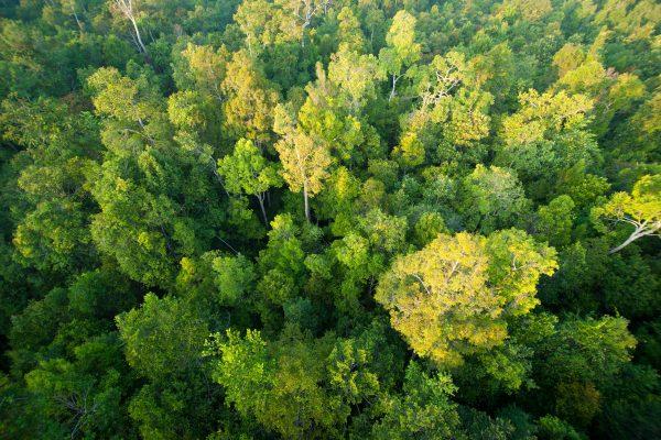 Forest landscape 24- Sabangau - Andrew Walmsley  - 2012