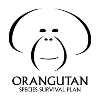 Orangutan Species Survival Plan