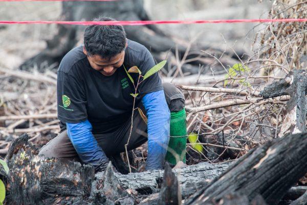 Planting October 2016-13-Sabangau-Pau Brugues Sintes