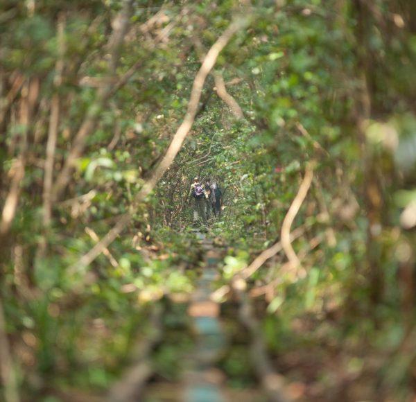 Railway into the forest - Sabangau - Andrew Walmsley - 2012