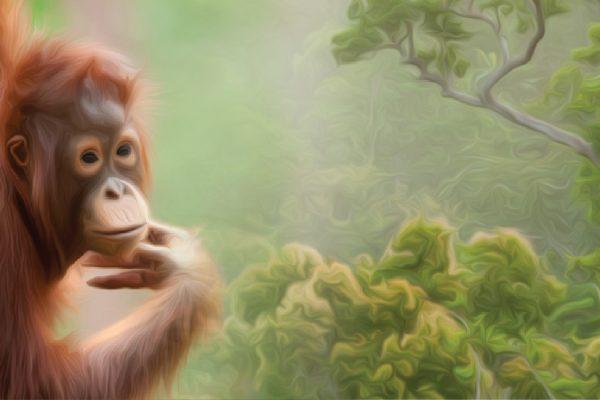 Rainforest live - web cover - blank (2)