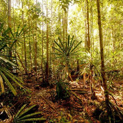 Rungan-Landscape-1_Photo-by-Bernat-Ripoll-and-Borneo-Nature-Foundation
