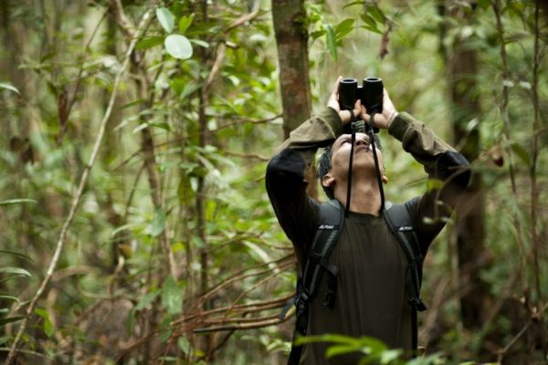 forest ecology_borneo_science_research